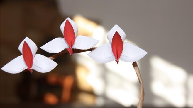 Kağıt çiçek, kendiniz yapabileceğiniz zarif bir dekorasyon